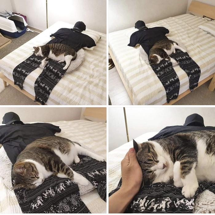 Когнитивный диссонанс кота