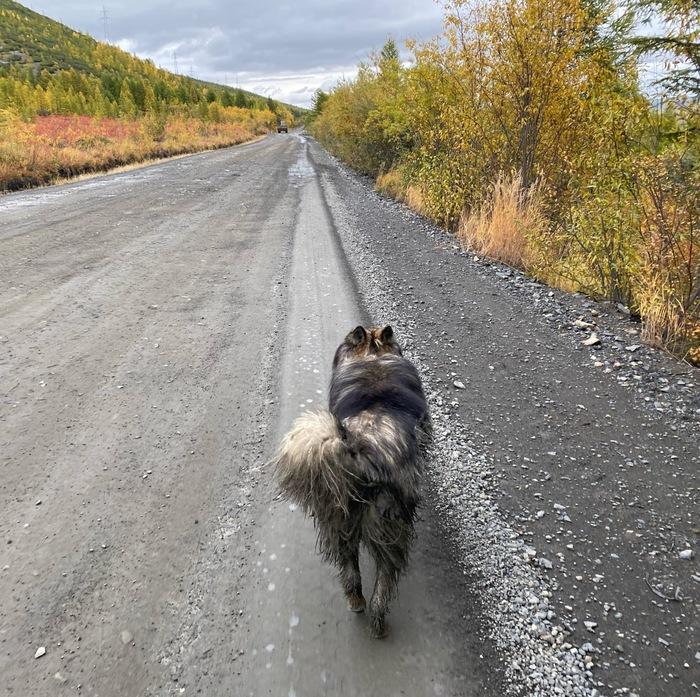Собака бежала со мной по Колыме