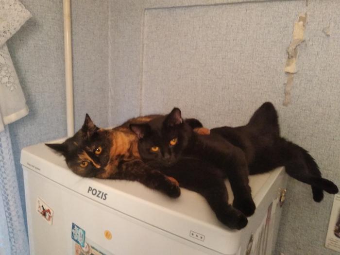 Кошачья обида