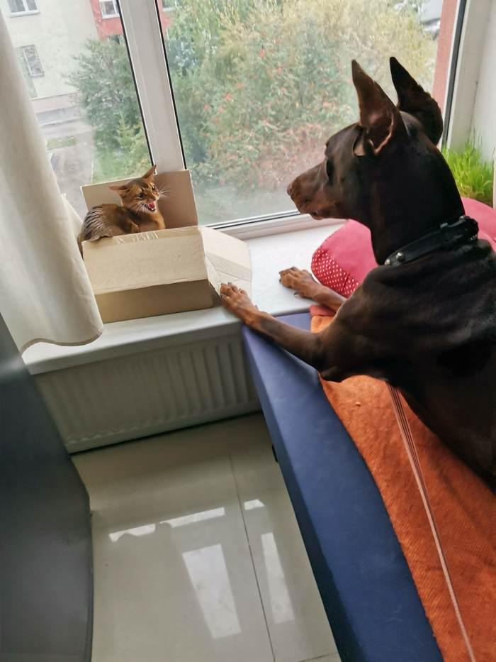 Пёс Дюк ищет хозяев
