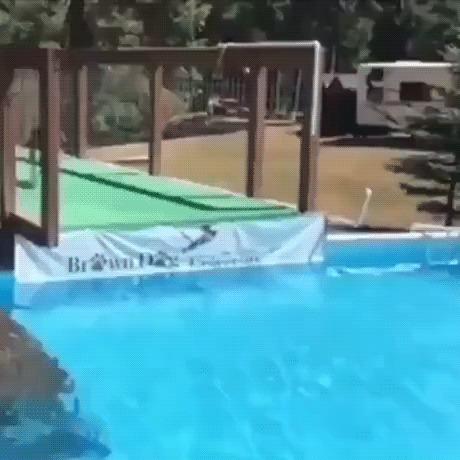 Прыжок собаки в длину - 9,45 метров (31 фут) Собака, Прыжок, Бассейн, Прыжки в длину, Спорт, Гифка