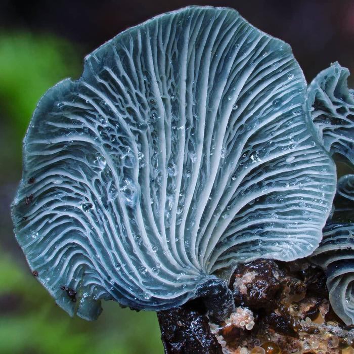 Безумная подборка из царства грибов + научный факт Грибы, Мицелий, Факты, Опята, Длиннопост