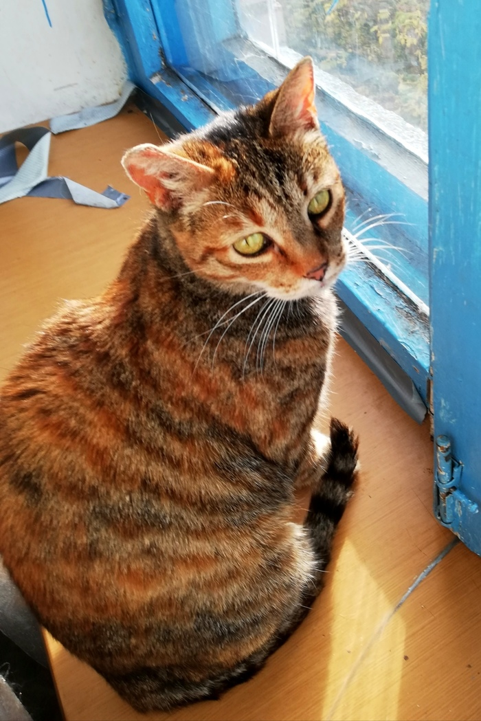 Кошечка, оставленная на улице в переноске, ищет дом