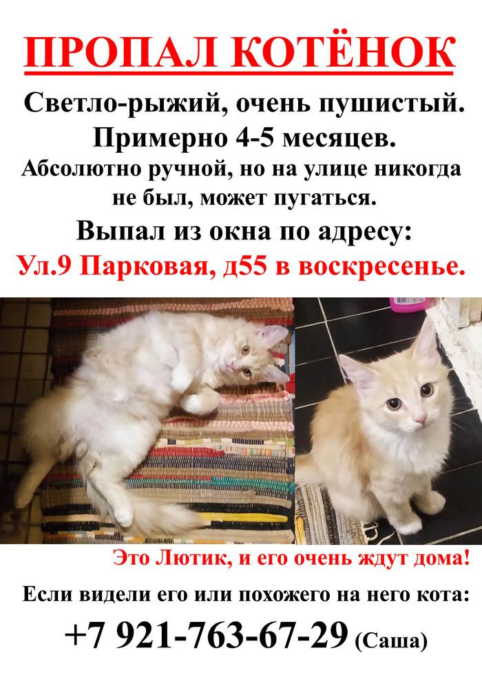 Потерялся котёнок