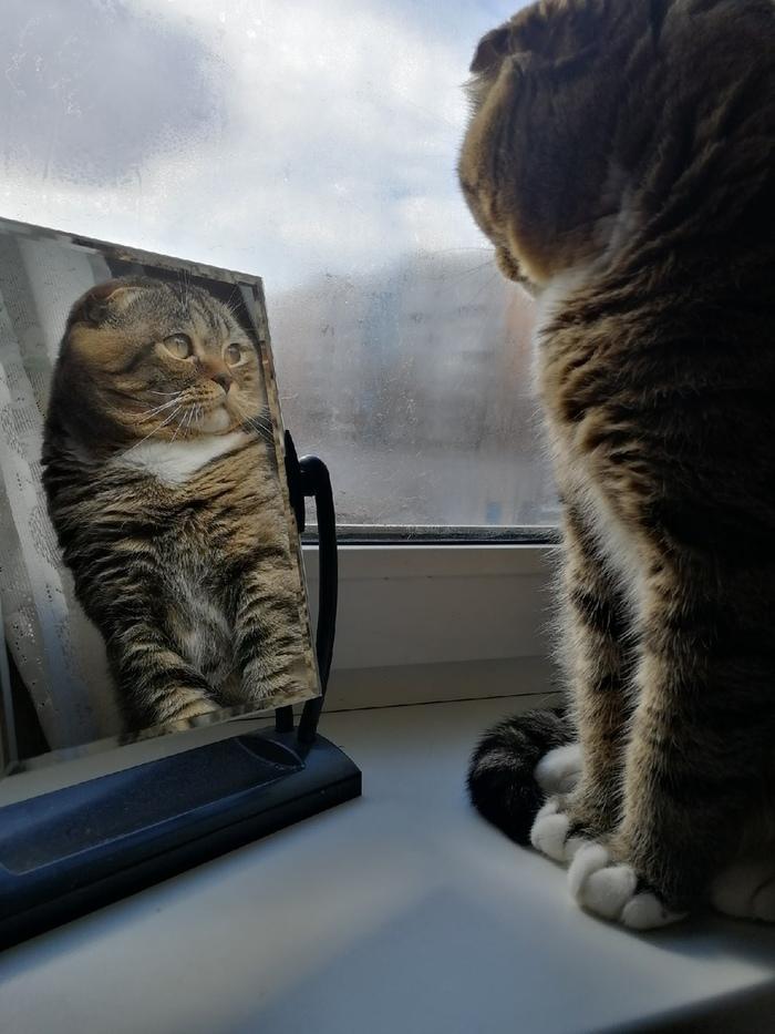 Свет мой зеркальце