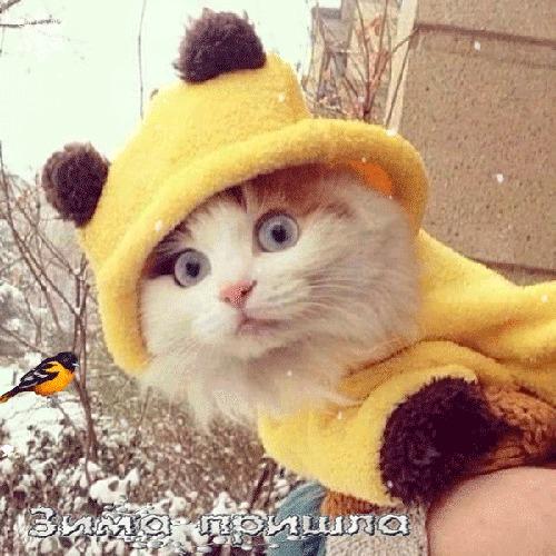 1 декабря Декабрь, Первый день зимы, Кот, Ирония, Юмор, Стихи, Гифка, Длиннопост