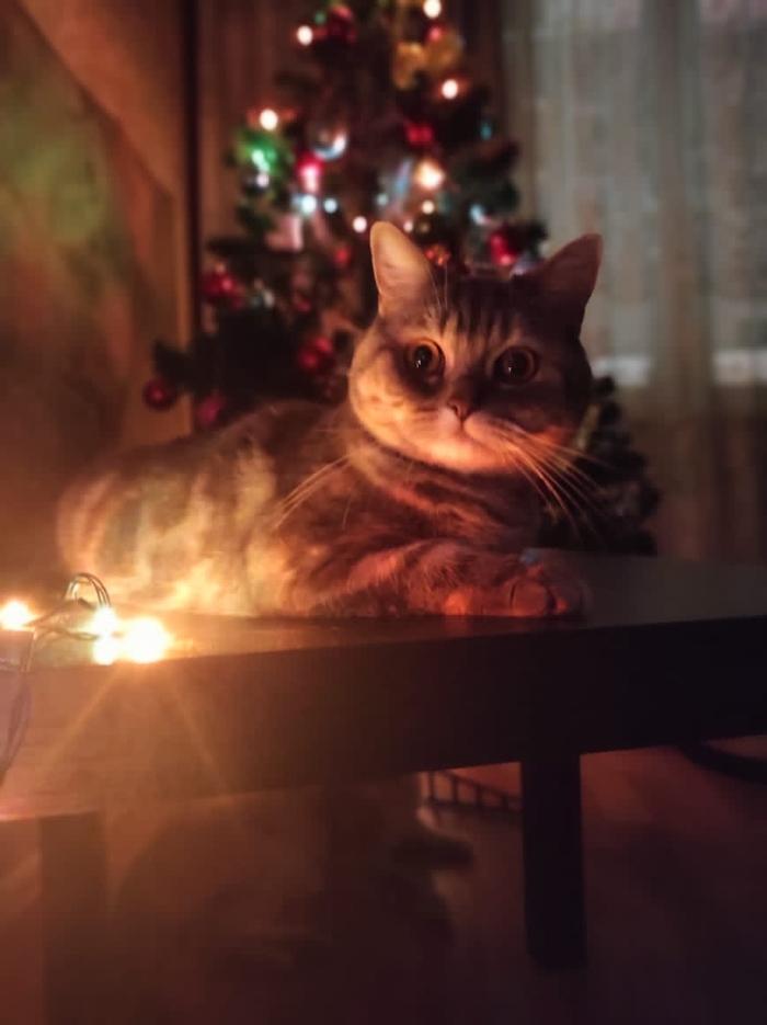 Новогодняя)