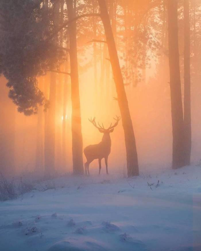 Восход в зимнем лесу