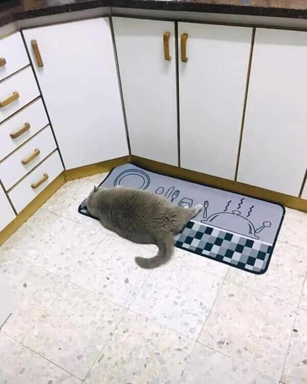 Голодный обморок на кухне