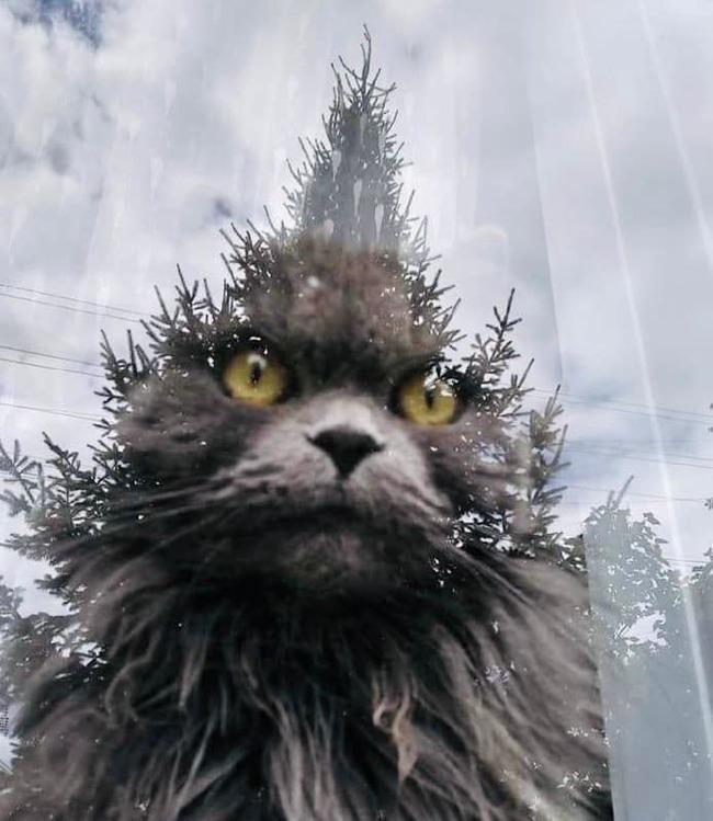Очень новогодний кот