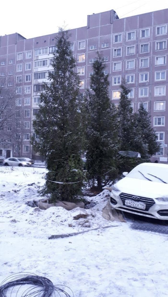 Тварь, сейчас на колени поставим. В Петербурге избили семью, которая вступилась за дочь-подростка