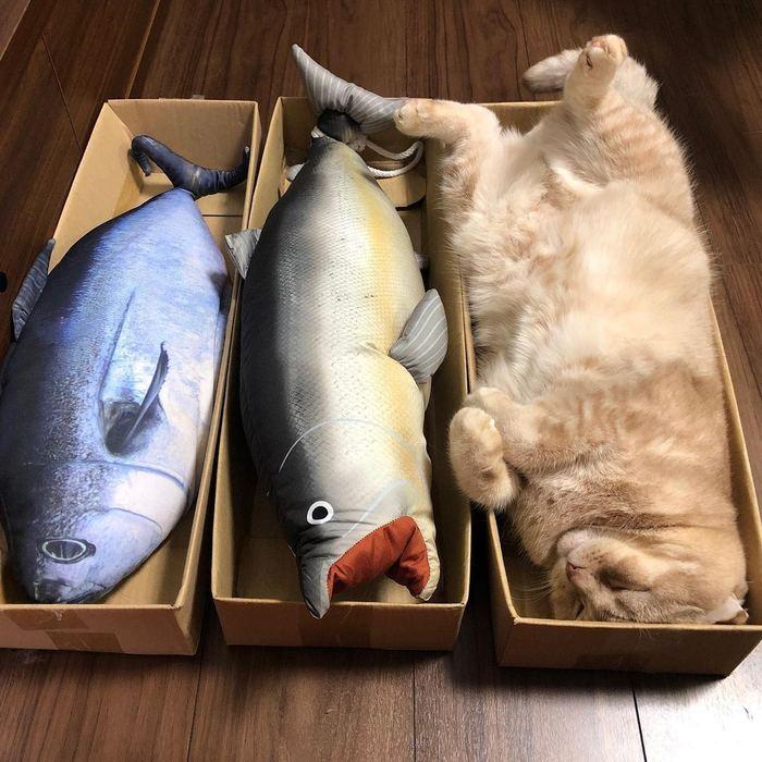Спят усатые и игрушки