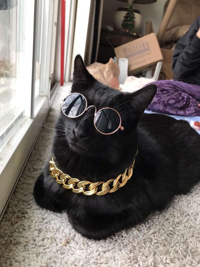 """""""Моя младшая сестра купила для своего кота немного крутых аксессуаров"""""""
