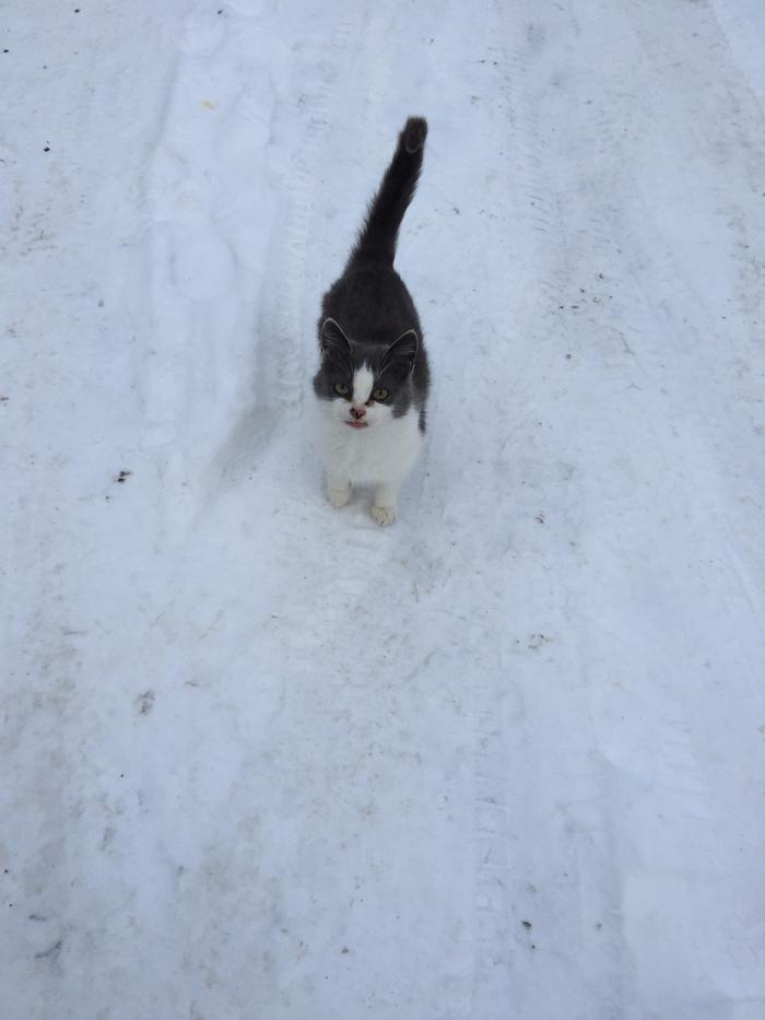 Отчёт о кормлении брошенных в садоводствах котов. 11 января. До весны 49 дней. Температура - минус 17