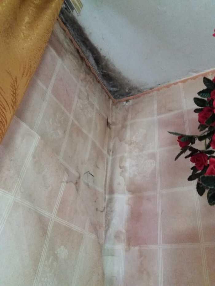 Грибок чёрного цвета в углах и стенах квартиры после ремонта УК ЖКХ, Негатив, Помощь, Совет, Юридическая помощь, Длиннопост