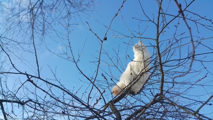 Тучка, птичка, самолет ? Нет это кот !