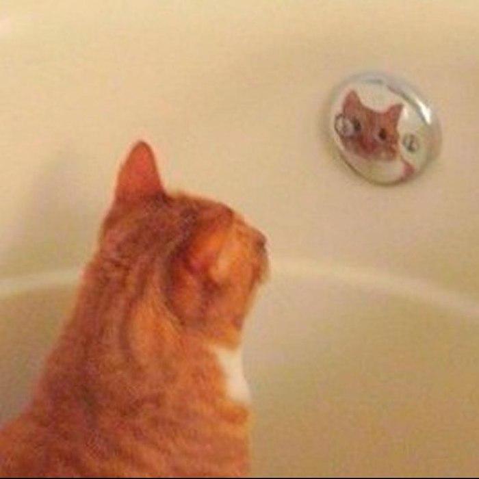 Не мог долго найти кота, оказалось он сидел в ванной и смотрел на свое отражение