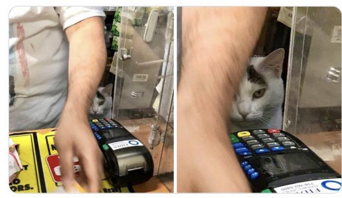 Помощник продавца