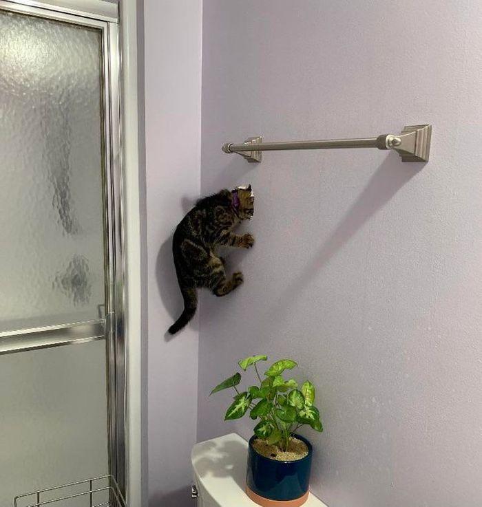Кот Человека-Паука