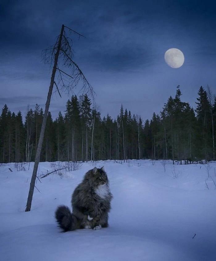 Страж лунного леса...