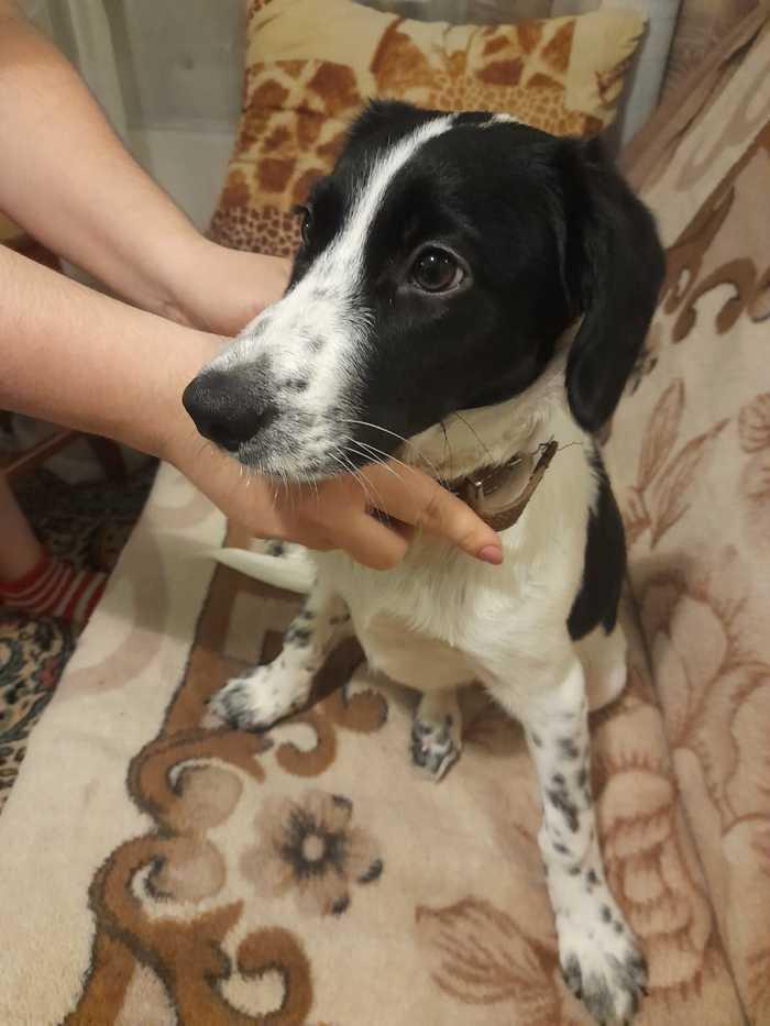 Найдена собака. Томск