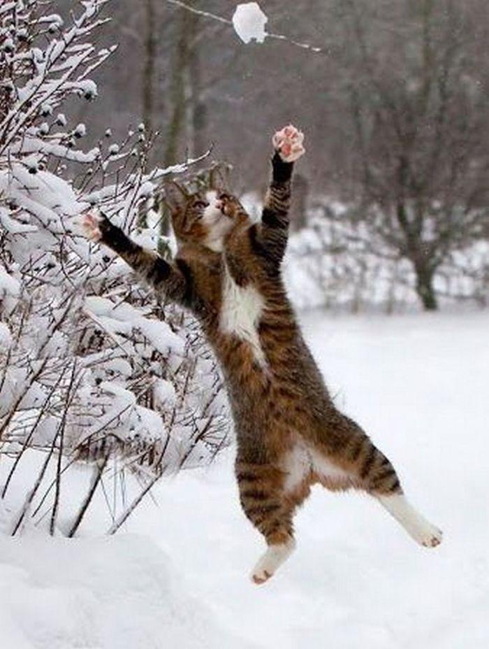В снежки играют все!