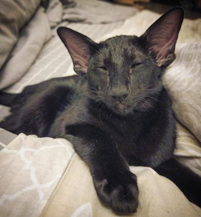 Кот сплюшка