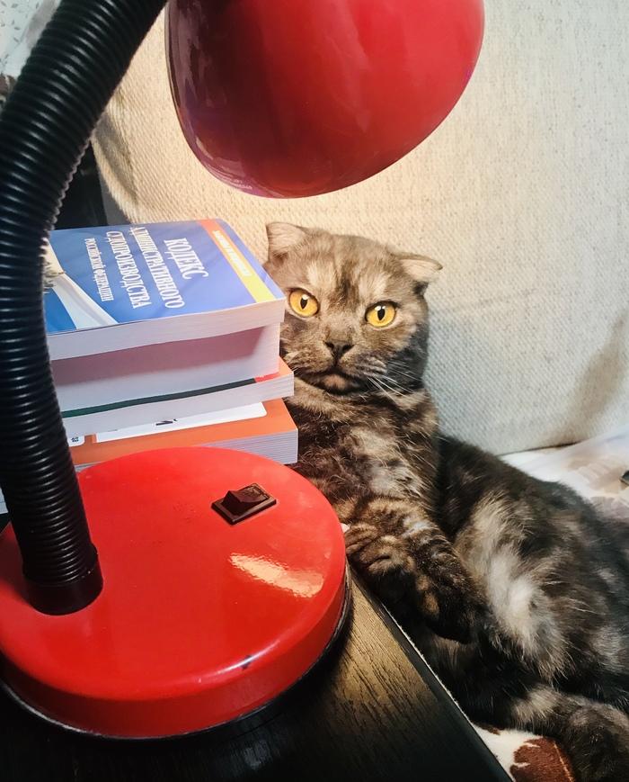 Кот учёный!