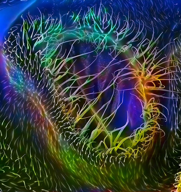 Дыхальце дрозофилы в электронном микроскопе (3000 x)