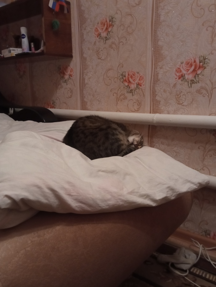 Просто кот )