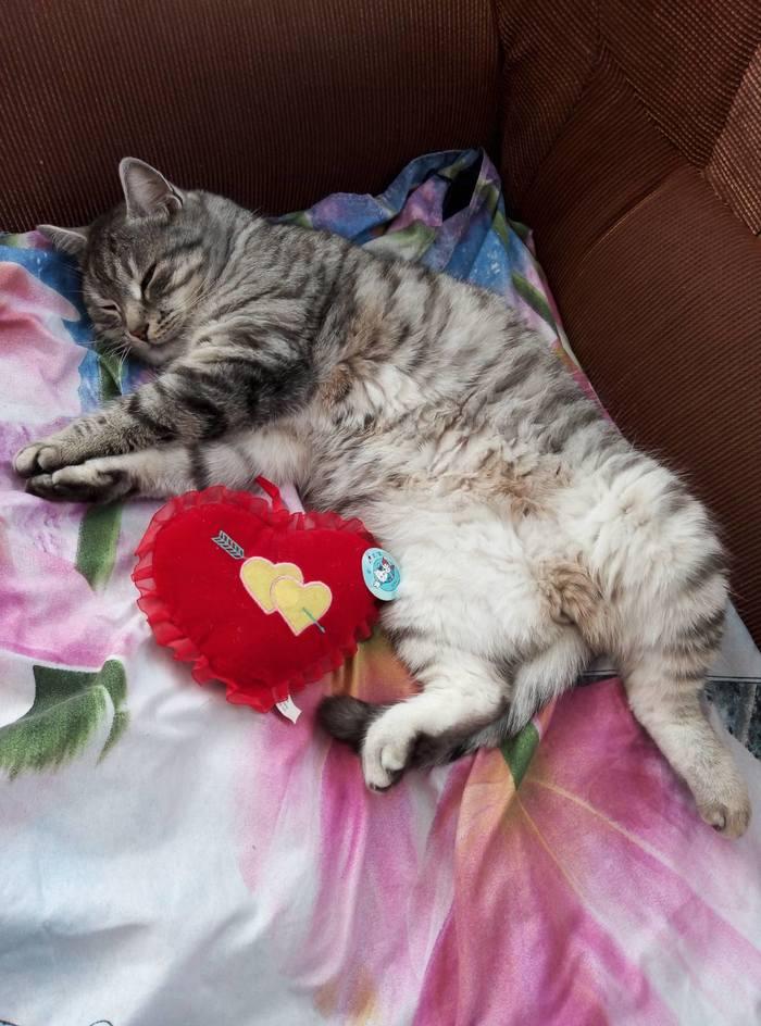 Кот Томас отмечает праздник