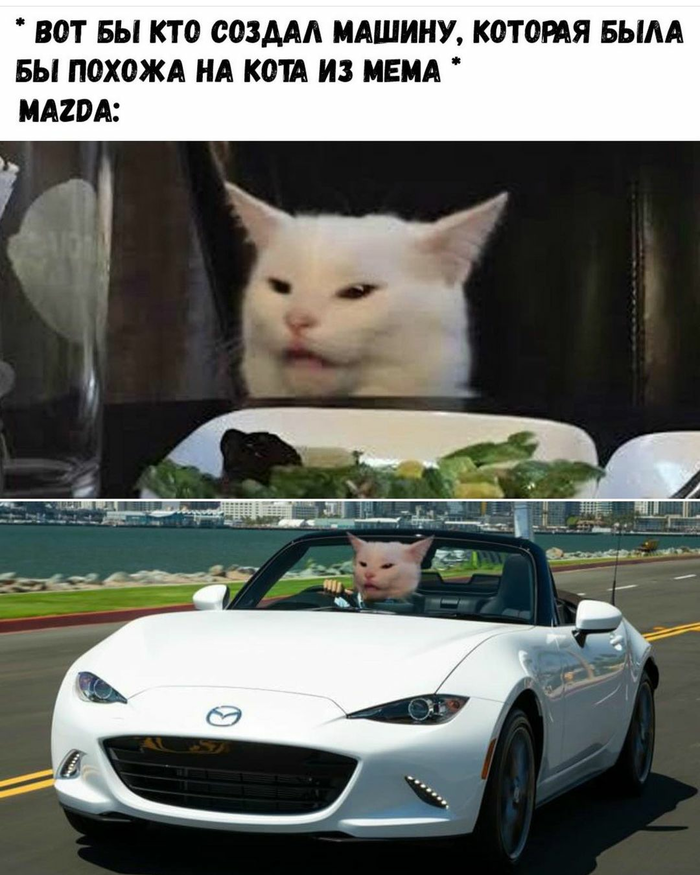 Кот из мема