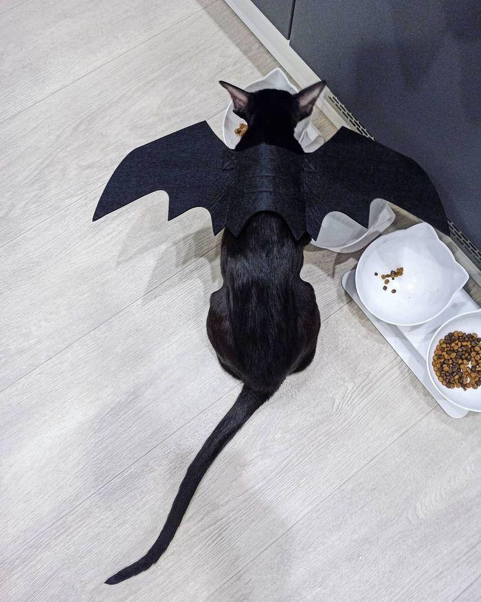 Дракон на водопое