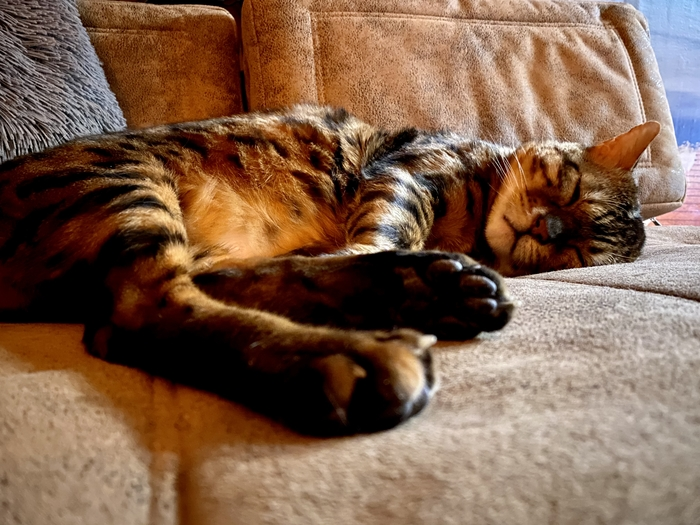 Котище отдыхает