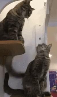 ТОП-6 фактов в кошках. ЧАСТЬ 6 Кот, Факты, Интересное, Сон, Гифка, Длиннопост