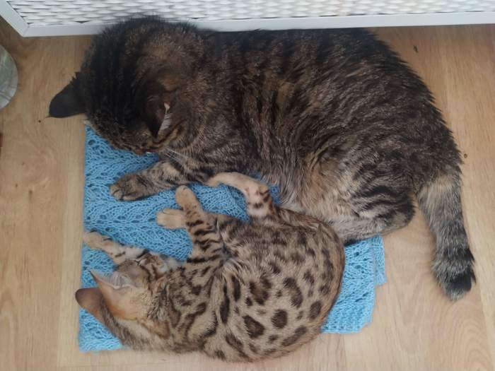 Продолжение поста Хроники побитой кошки