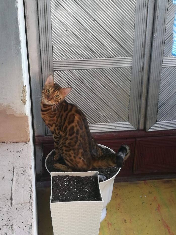 Котик...