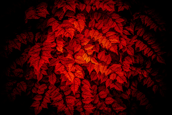 Красное на чёрном