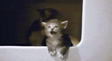 Выпивка и котенок Kat Swenski, Комиксы, Гифка, Гифка с предысторией, Кот, Перевел сам, Длиннопост, Алкоголь