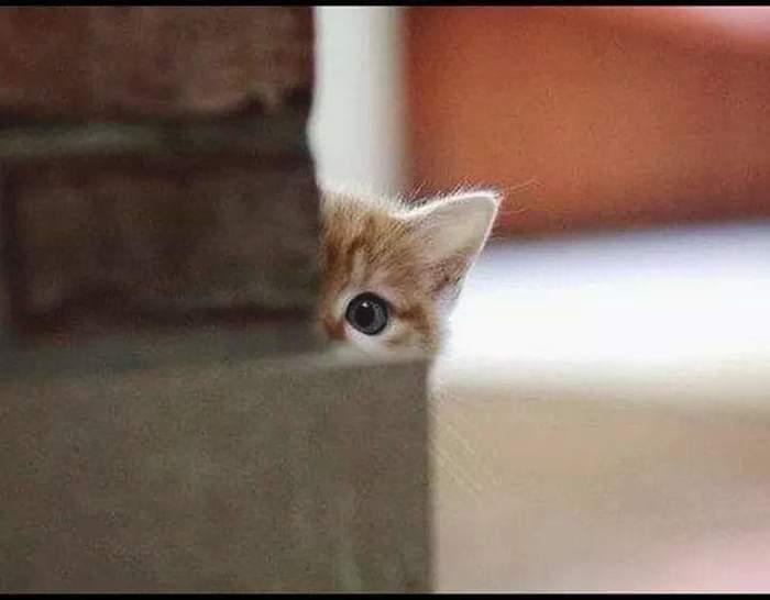 Наверное, есть без меня собираетесь?