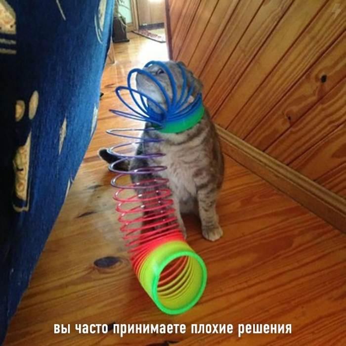 Признаки того, что ты кот