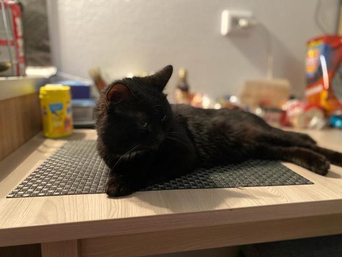 Привет из дома от черненького котика, которого подкинули в подъезд