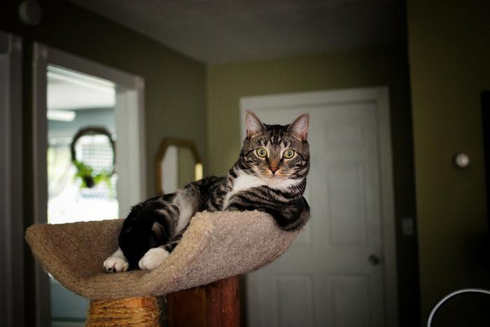 Внимание! Шикарный кот!