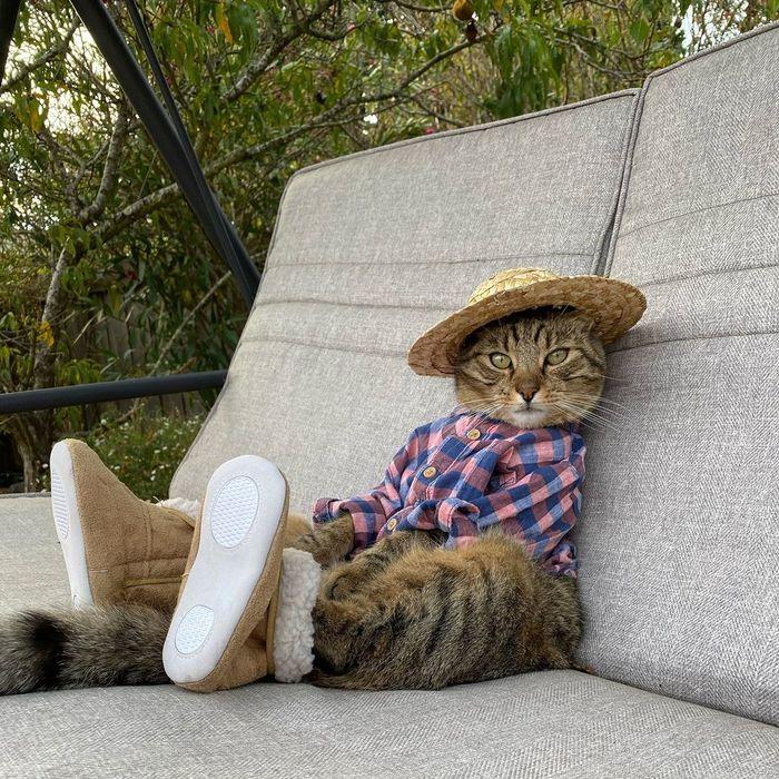 Модный котик на отдыхе