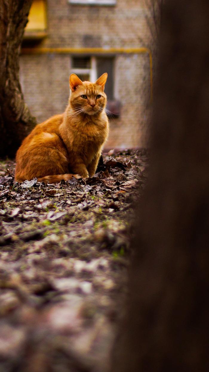 Рыжий охотник