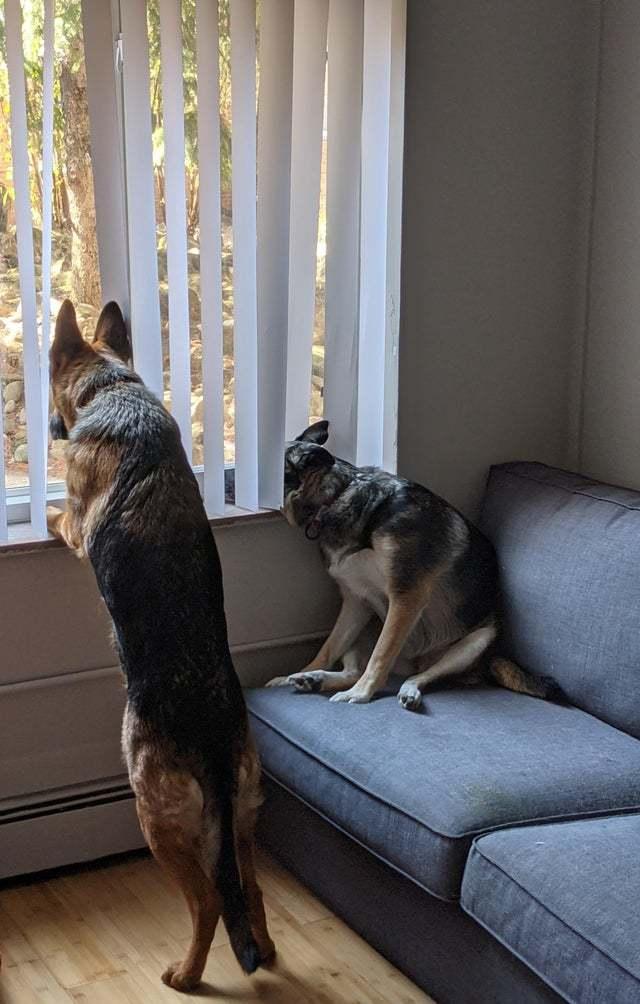Существуют два типа охранников...