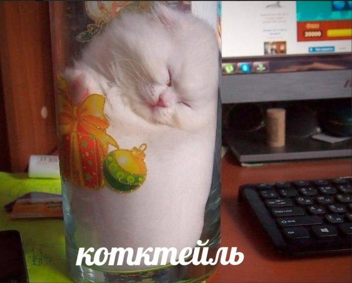 Котктейл!