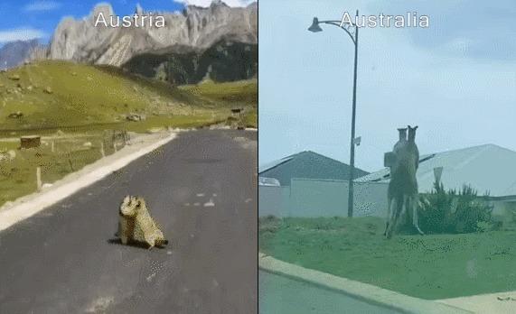 Разница между Австрией и Австралией