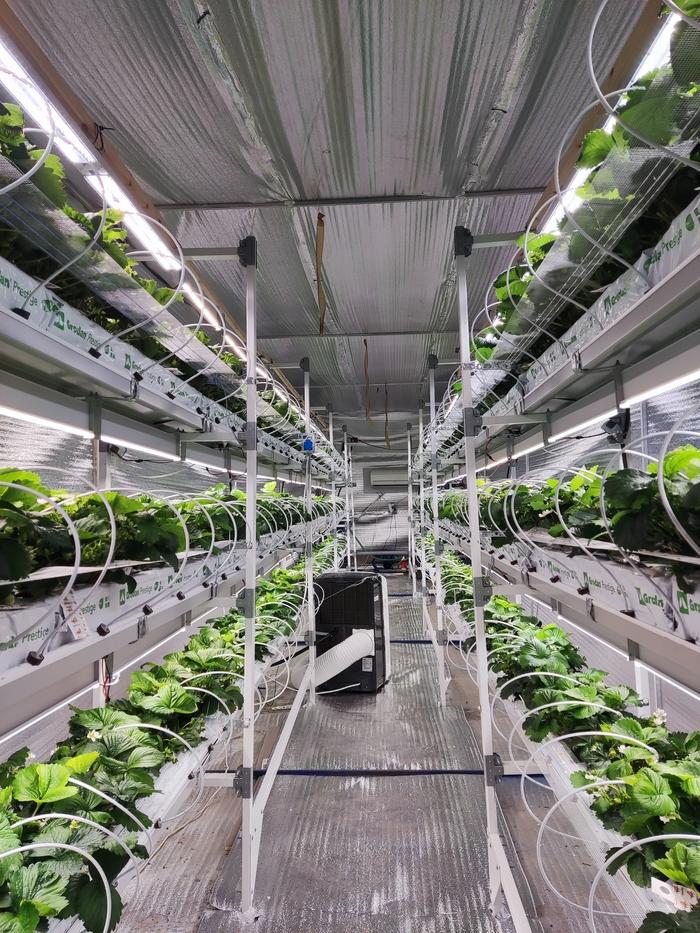 Вторая жизнь советского овощехранилища