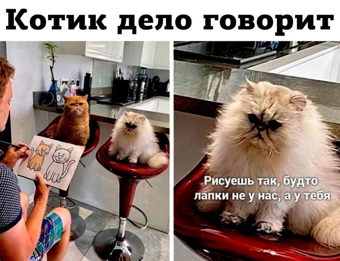 Котик дело говорит